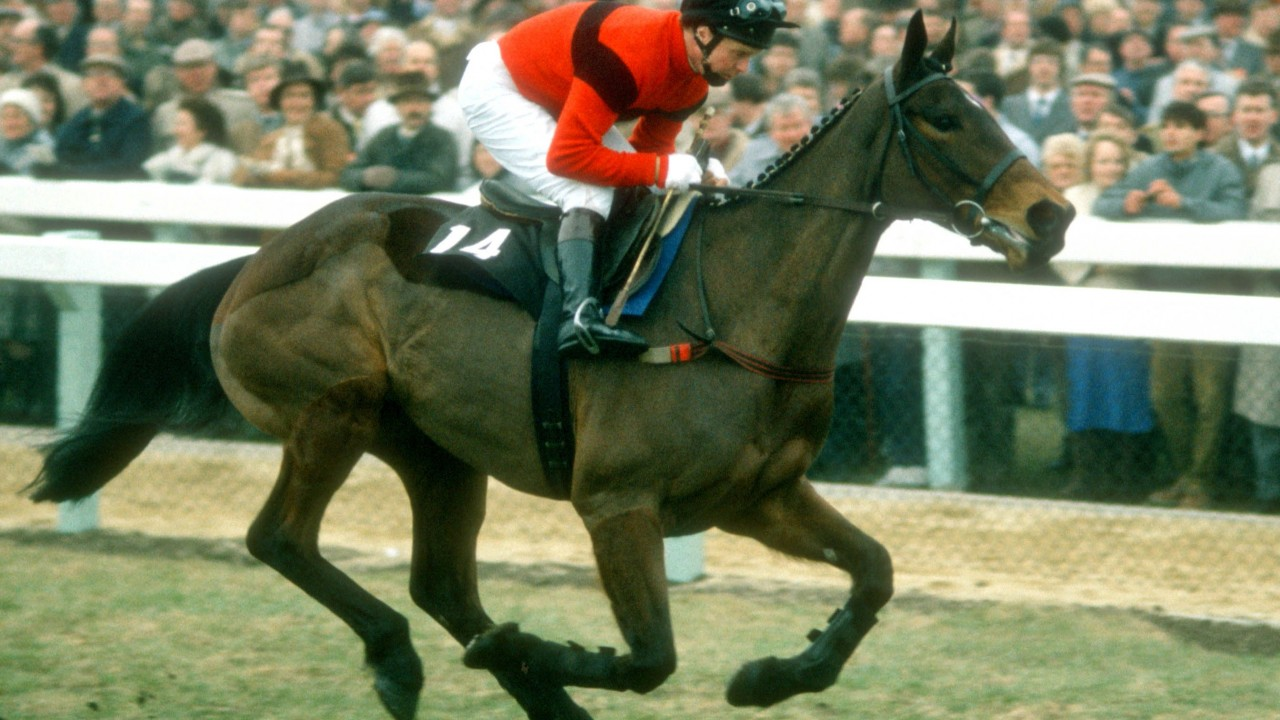 Dawn Run the most successful racemare in the history of National Hunt racing