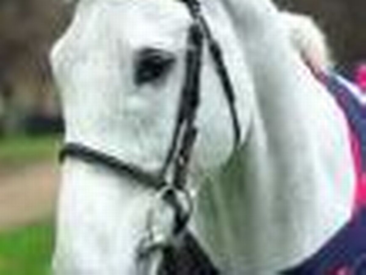 Desert Orchid: Racing Legend