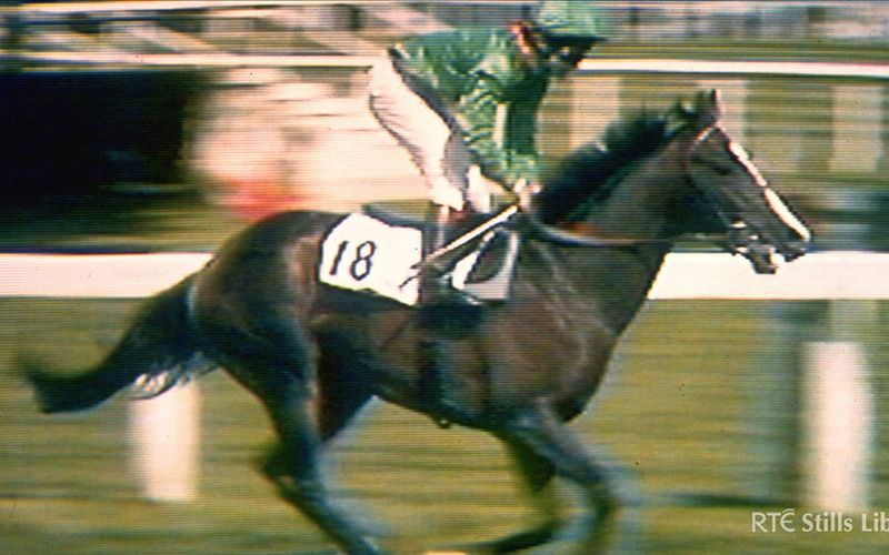 Mystery of Shergar the champion horse who was kidnapped
